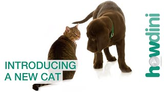 How to Make a Dog and Cat Friends