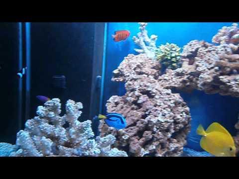 Acquario marino 250 litri youtube for Acquario 250 litri