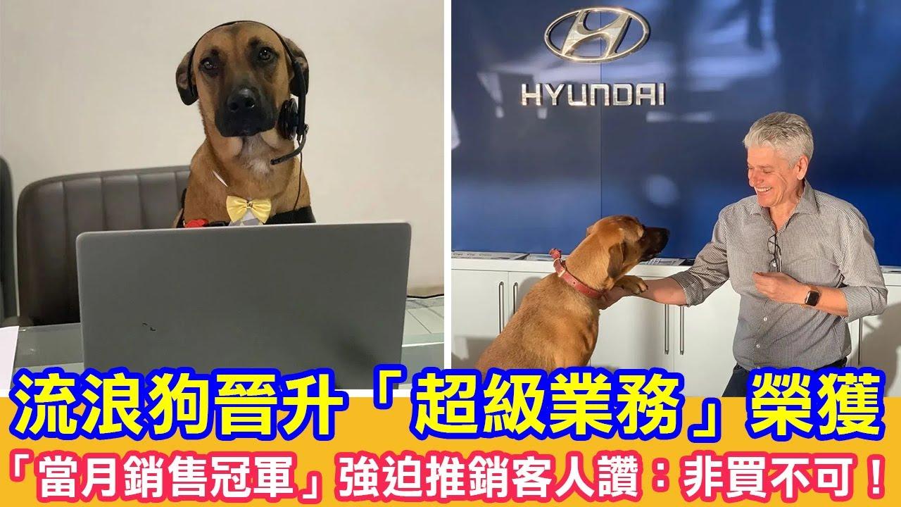 流浪狗晉升「超級業務」榮獲「當月銷售冠軍」強迫推銷客人讚:非買不可!|狗狗故事