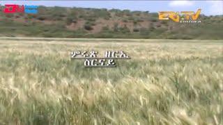ERi-TV, Eritrea - ፍረ ጻዕሪ፡ ምሩጽ ዘርኢ ስርናይ