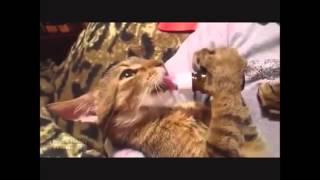 Без кота жизнь не та4 mp4 1