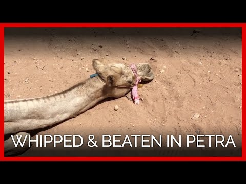 Animals Beaten and Whipped in