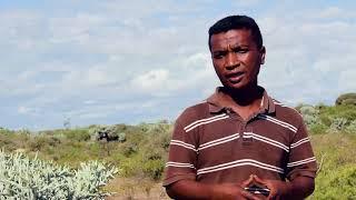 La culture durable de l'arbre fourrager Samata à Madagascar (Version française)