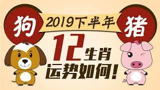 2019【生肖狗猪】下半年运势