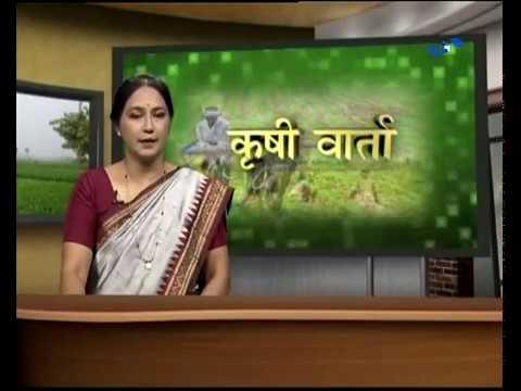 Krishivarta Bajarbhav - 22 June 2018 - कृषीवार्ता बाजारभाव