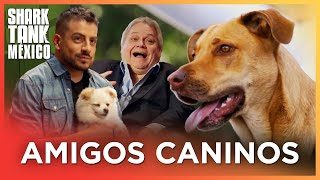 ¡Cinco productos increíbles para perros! | Compilación | Shark Tank México