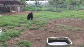 ラブラドゥードル専門犬舎のラブリー・ドゥードルです。