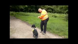 Search Dogs Essex Training Day