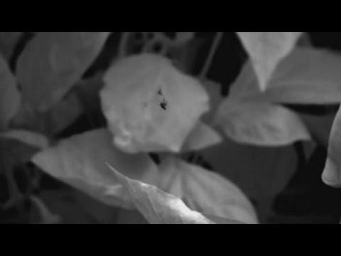 Cientistas captam momento em que mosca come presa em pleno voo