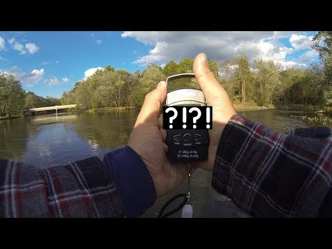 The BIGGEST Fish I've Ever Caught! (Fishing The Wallkill River)