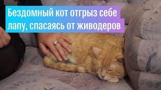 Кот из-под Смоленска отгрыз себе лапу, спасаясь от живодеров