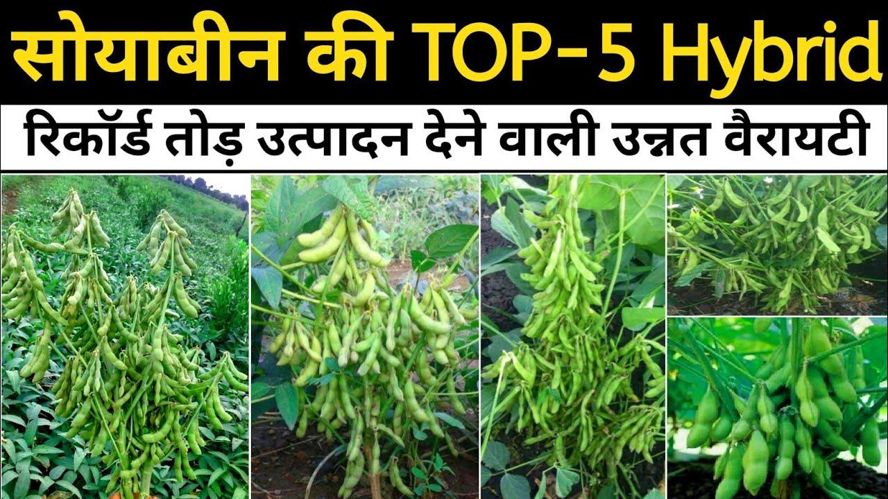 Soybean ki Top-5 Hybrid Variety | सोयाबीन की उन्नत किस्में | JS 9560, Js 2069, Js 2034, Js 2029