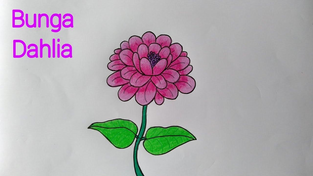 Menggambar Bunga Dahlia Cara Menggambar Bunga Yang Mudah Youtube