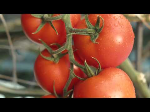 What We Eat - Nature Fresh Farms
