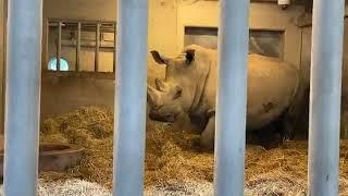 Frikvarter 14: Næsehornsfødsel
