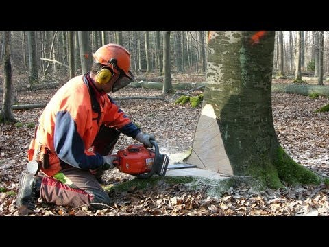 Sustainable Forestry, Hesse State Forest Enterprise