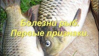 Болезни рыб. Первые признаки. Рыба карп.(Все болезни рыб имеют одну общую характерную особенность - при заболевании, у рыбы резко меняется манера..., 2014-04-27T09:29:40.000Z)