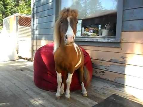 Bean Bag Chair Review From A Mini Horse Real And Cute