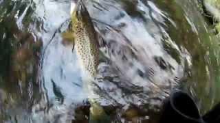 Форелька-трофеюшка  (видео-отчет) рыбалка сентябрь 2015 Ловля форели на спиннинг(Форель на спиннинг. Выдалась активная рыболовная неделька, щука ловилось плохо. А вот форелька на спиннинг..., 2015-09-20T12:35:49.000Z)