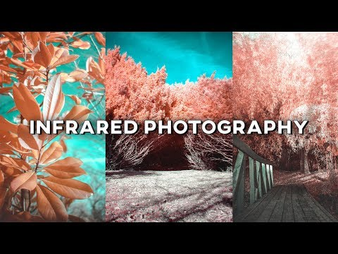 Infrared Photography with an IR Lens Filter