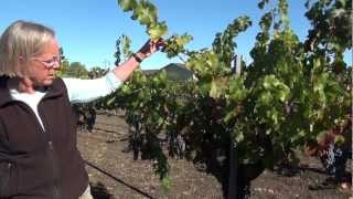 Discover Napa Wineries HD 2012