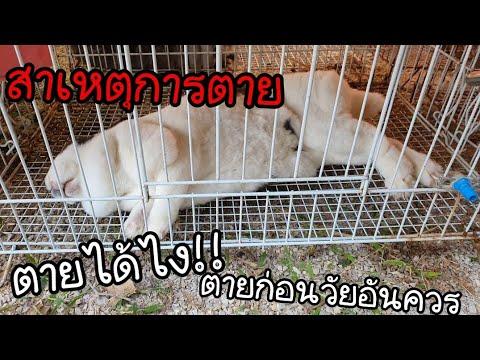 สาเหตุที่ทำให้กระต่ายตาย พร้อมวิธีป้องกัน ดูให้จบ!||KeawMaRoon