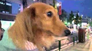 http://www.m-dachshund.jp/ JR八王子南口に新しく出来たタワーマンショ...
