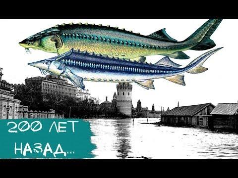 Ты не поверишь! Вот какая рыба водилась в Москва-реке 200 лет назад!