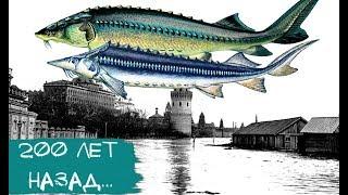 Фото Ты не поверишь Вот какая рыба водилась в Москва-реке 200 лет назад