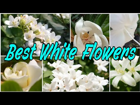53 - Best 15+ Amazing White Flowers With Name || Floral Gardening
