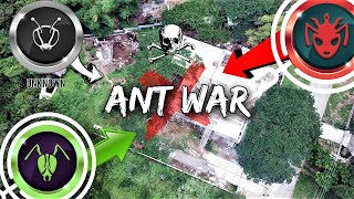 There's a Massive ANT WAR Happening in My Backyard | 'The Battle for Antopia'