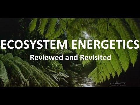 Ecosystem Energetics: Reviewed and Revisited