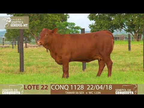 LOTE 22 CONQ 1128