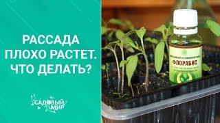 Почему рассада плохо растет. Что делать если томаты, перцы, баклажаны не развиваются??