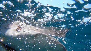 Fish Bytes: NJ Shark Adventure