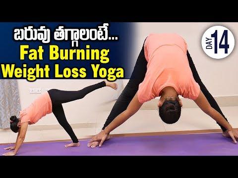 Weight Loss Yoga DAY 14 || 30 DAYS YOGA || SumanTV