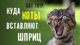 Cat Trip: Куда коты вставляют шприц
