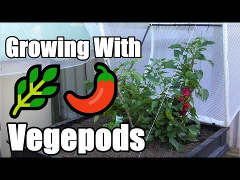 Growing With a Vegepod & Discount Offer for Aussies