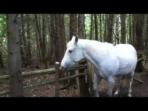 Testing my horse allergies – nasal spray