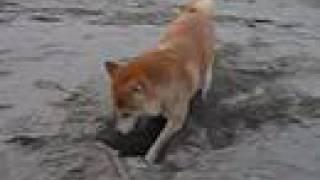 水が嫌いなので海も大嫌い。 でも、砂浜で穴を掘って遊ぶのは好きです。...