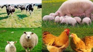 ERP система управления сельским хозяйством