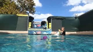 Pit Bull Terrier Border Collie Mix Coco Steals Black Labrador Retriever Sadie's Dog Pool Toys