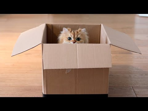 WHY CATS LIKE BOXES SO MUCH