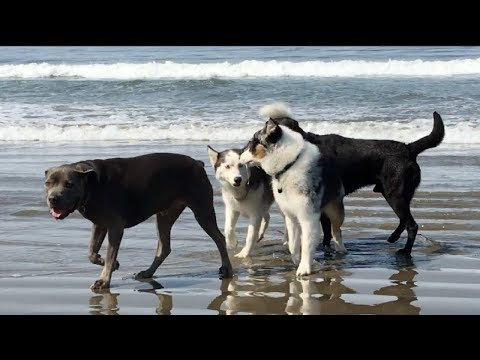 Dogs Go to the Beach for the First Time from YouTube · Duration:  10 minutes 6 seconds