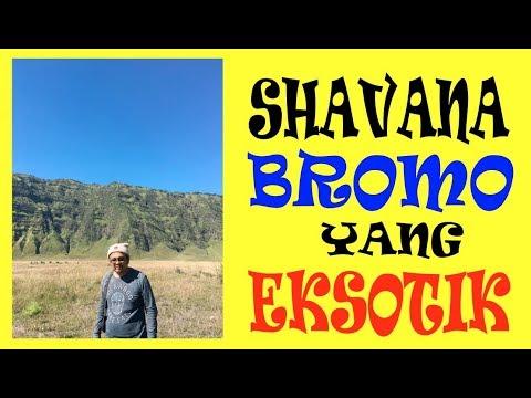 ratusan-jeep-menuju-padang-rumput-shavana-bromo-yang-eksotik