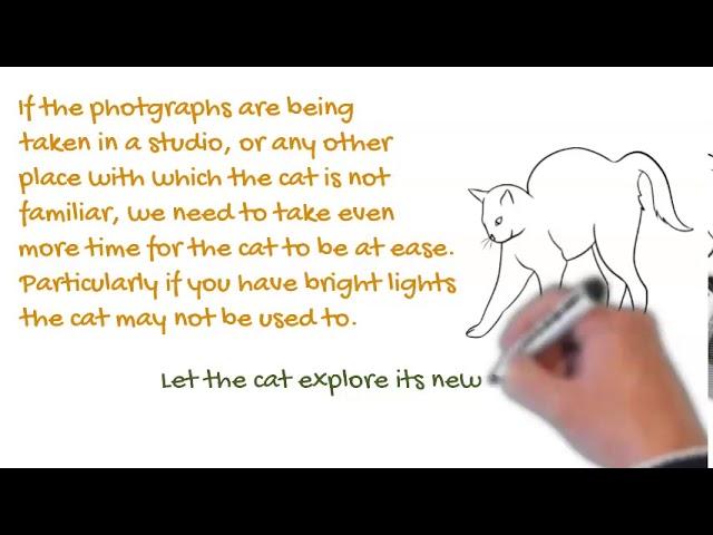 Feline Photos