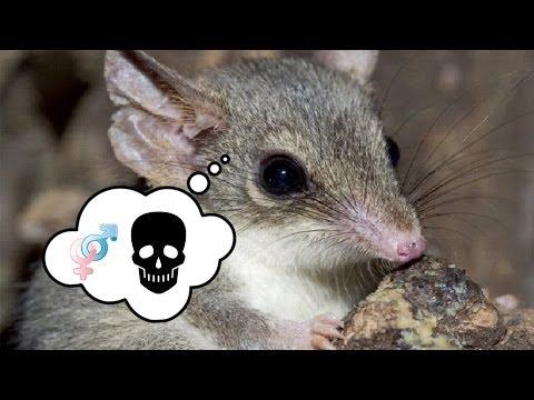 Cute Little Animals DIE For Sex