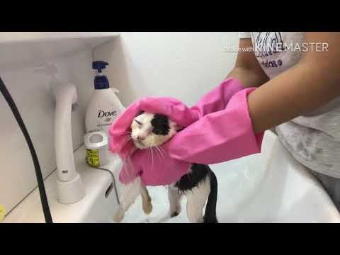 Abandoned Baby Kitten Bath For the first Time Ever...