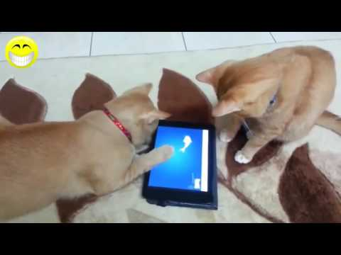 Funny Cat   Funny Cats Video   Funny cats Compilation 2016   Best Funny Videos 1