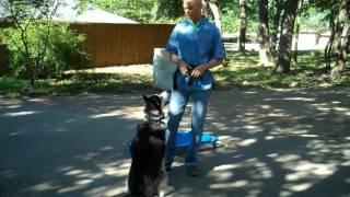 Zane The Husky Going Home Today